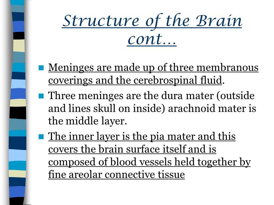 Structure of the Brain cont…