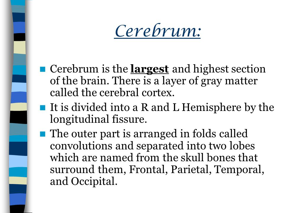 Cerebrum: Cerebrum is the largest and highest section of the brain. There is a layer of gray matter called the cerebral cortex.