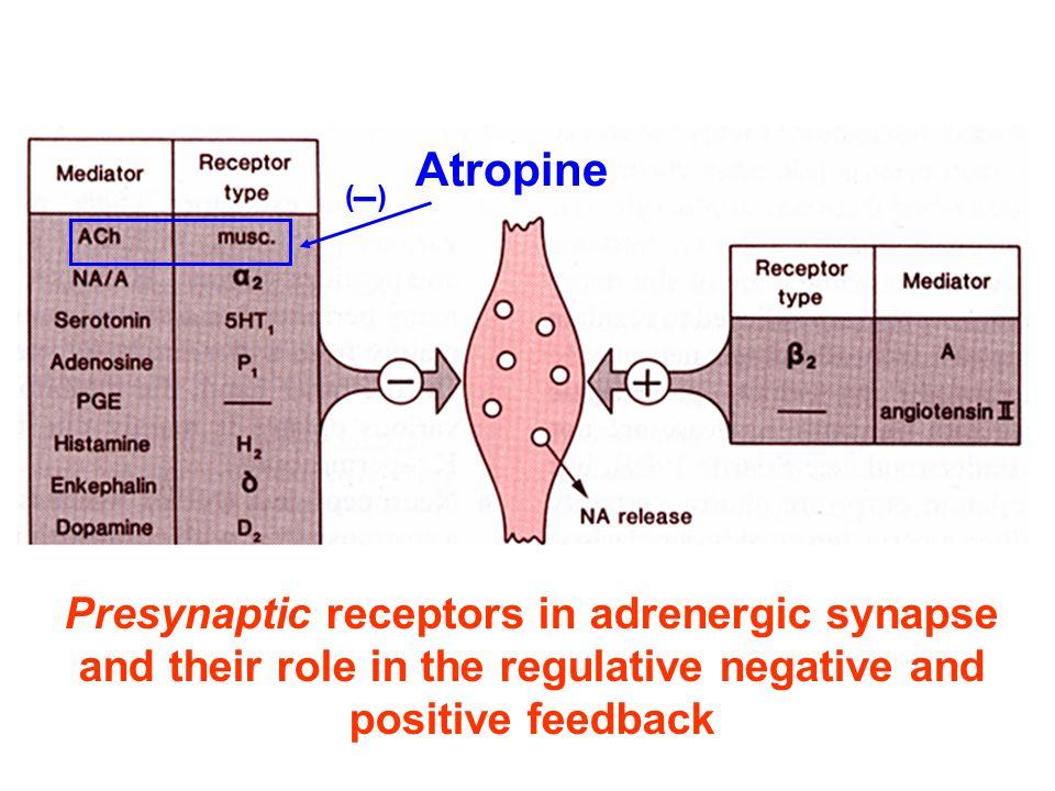 Atropine Presynaptic receptors in adrenergic synapse