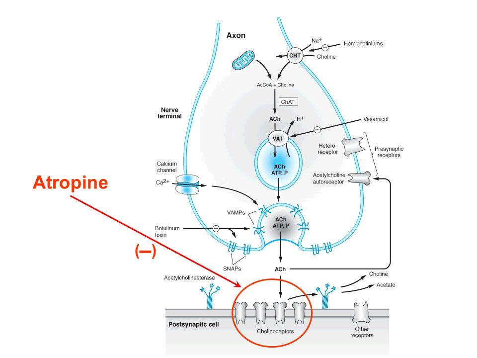 Atropine ()