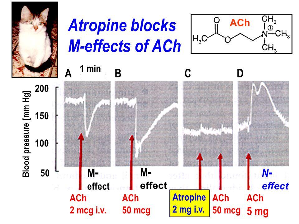 Atropine blocks M-effects of ACh A B C D M- M- N- 5 mg ACh 1 min 200