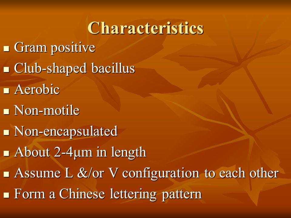 Characteristics Gram positive Club-shaped bacillus Aerobic Non-motile