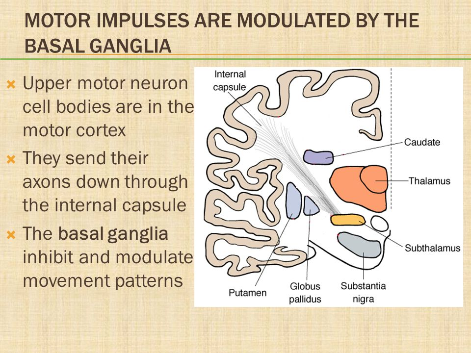 Motor Impulses Are Modulated by the Basal Ganglia