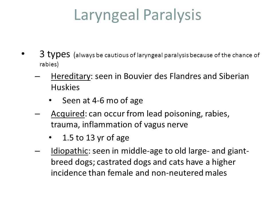 Laryngeal Paralysis 3 types (always be cautious of laryngeal paralysis because of the chance of rabies)