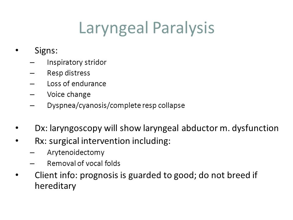 Laryngeal Paralysis Signs: