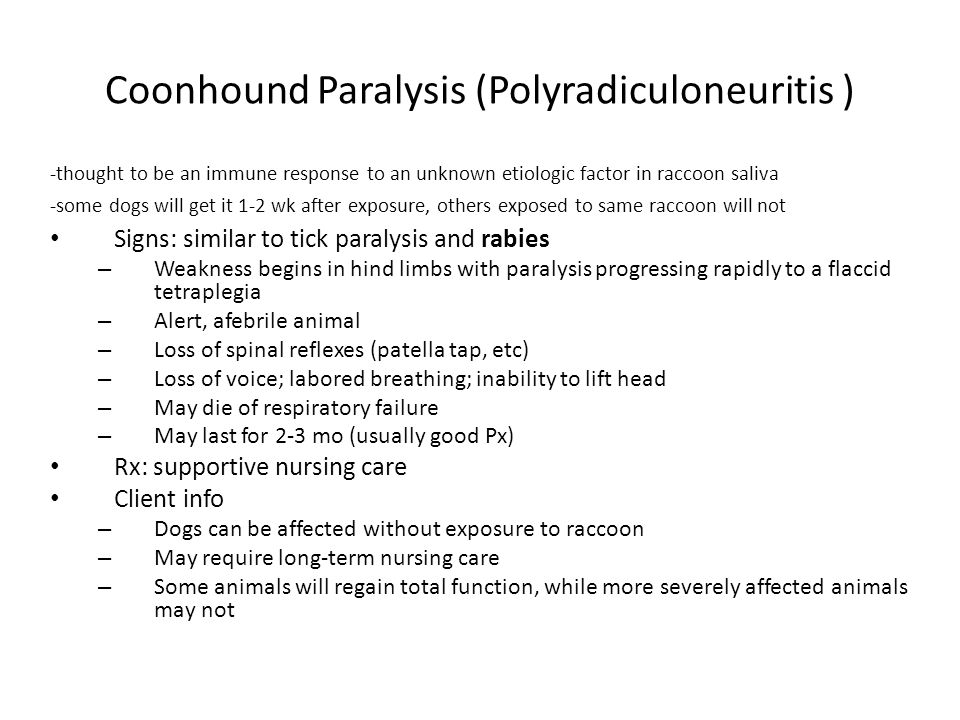 Coonhound Paralysis (Polyradiculoneuritis )