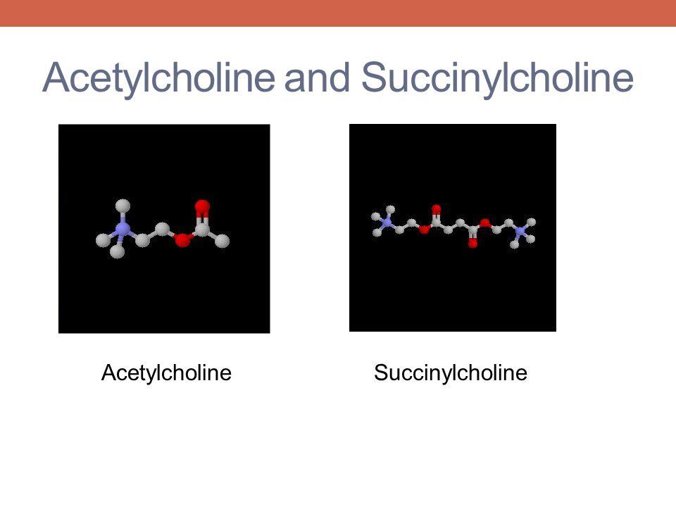 Acetylcholine and Succinylcholine