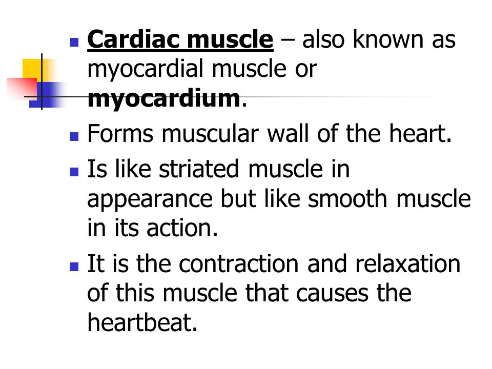 Cardiac muscle – also known as myocardial muscle or myocardium.
