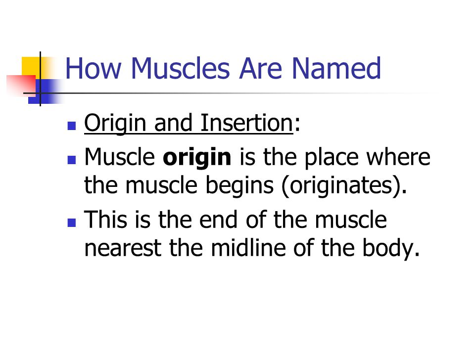 How Muscles Are Named Origin and Insertion: