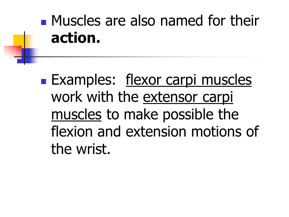 Muscles are also named for their action.
