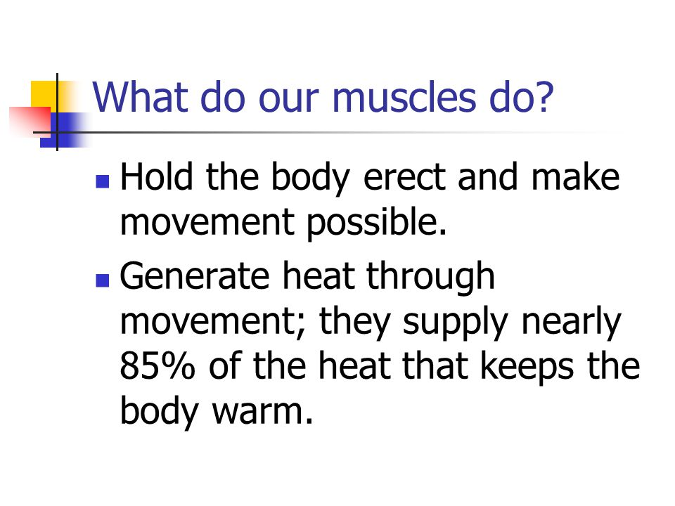 What do our muscles do Hold the body erect and make movement possible.