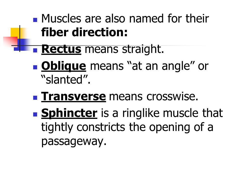 Muscles are also named for their fiber direction: