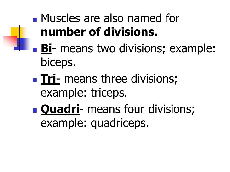 Muscles are also named for number of divisions.