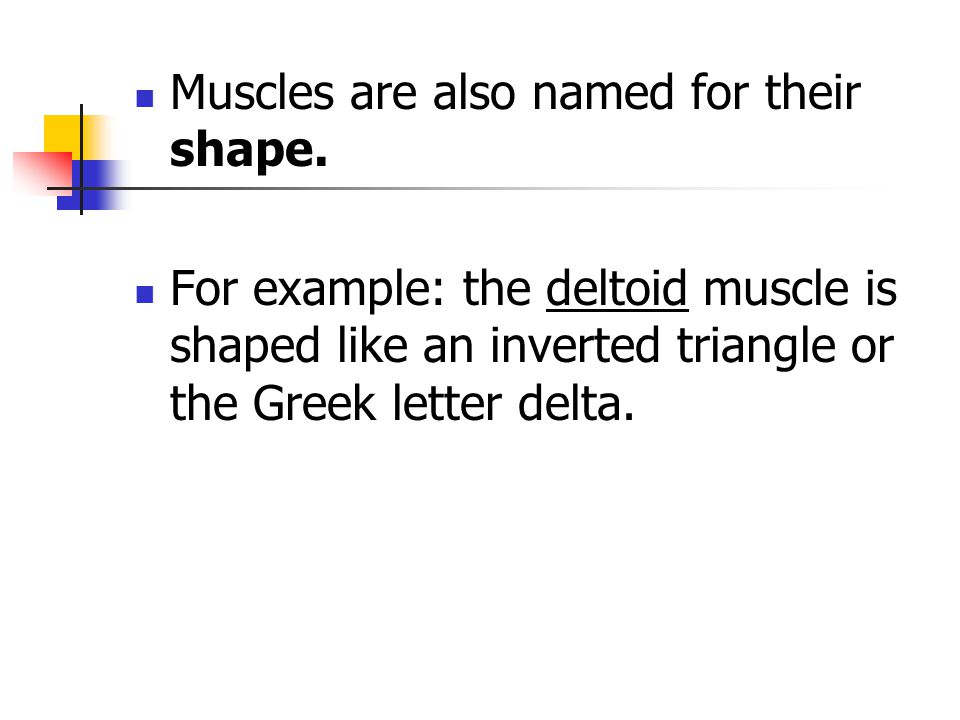 Muscles are also named for their shape.