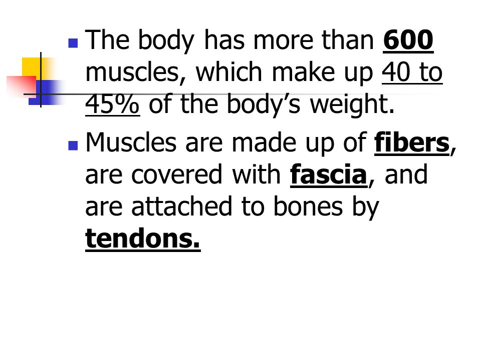 The body has more than 600 muscles, which make up 40 to 45% of the body's weight.