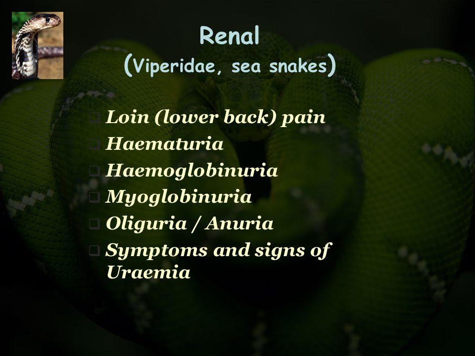 Renal (Viperidae, sea snakes)