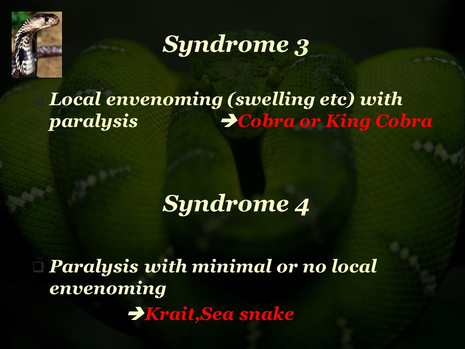 Syndrome 3 Local envenoming (swelling etc) with paralysis Cobra or King Cobra. Syndrome 4. Paralysis with minimal or no local envenoming.