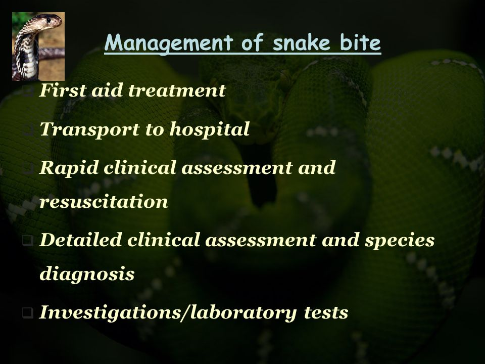 Management of snake bite