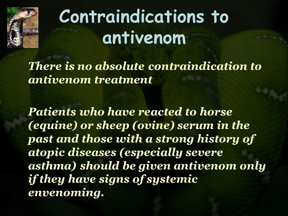 Contraindications to antivenom