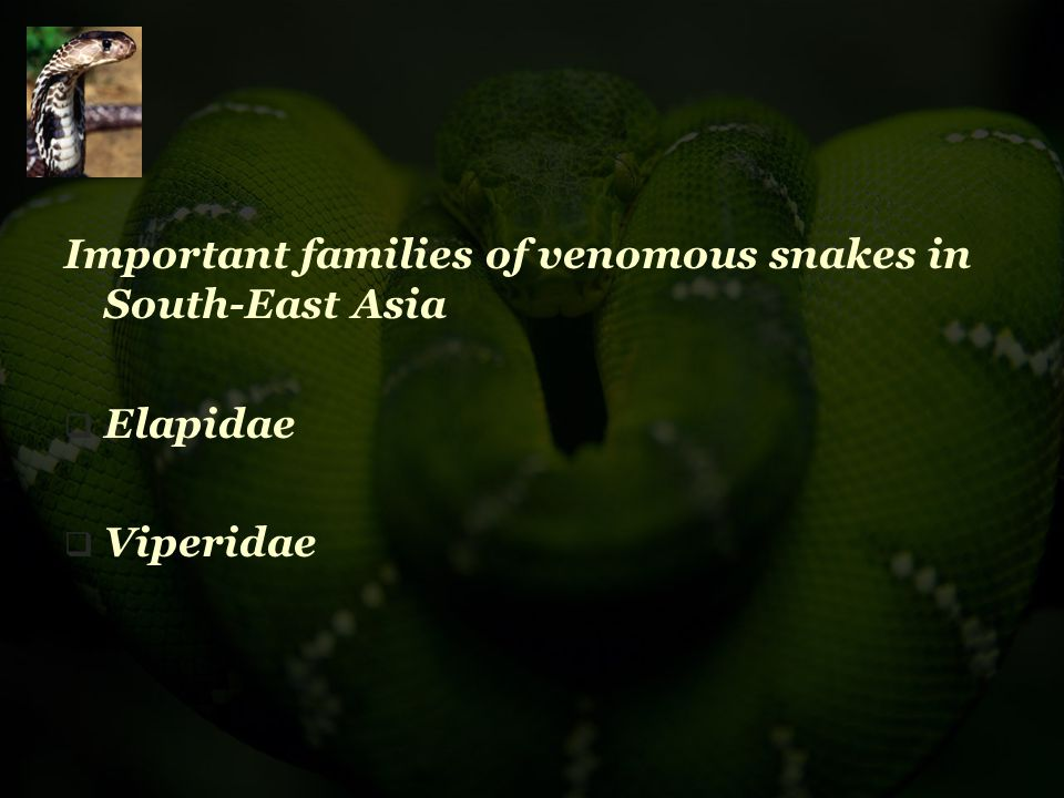 Important families of venomous snakes in South-East Asia