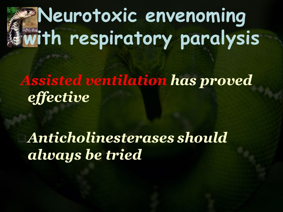 Neurotoxic envenoming with respiratory paralysis