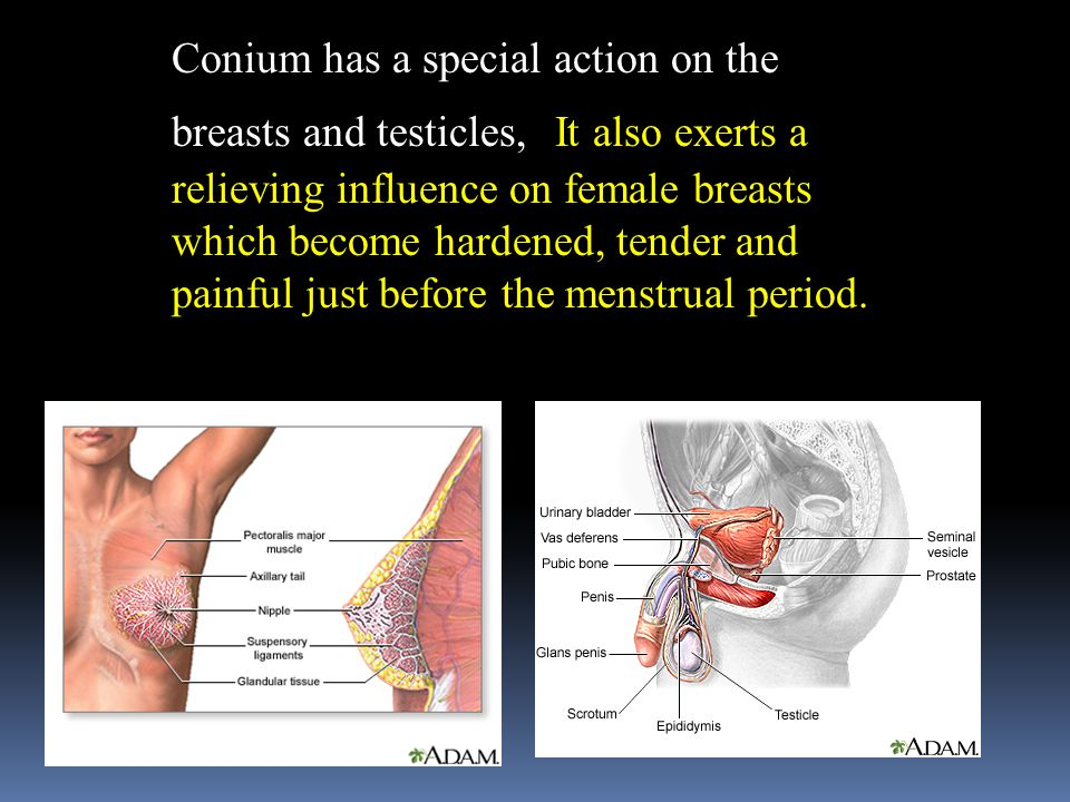 Conium has a special action on the breasts and testicles, It also exerts a relieving influence on female breasts which become hardened, tender and painful just before the menstrual period.