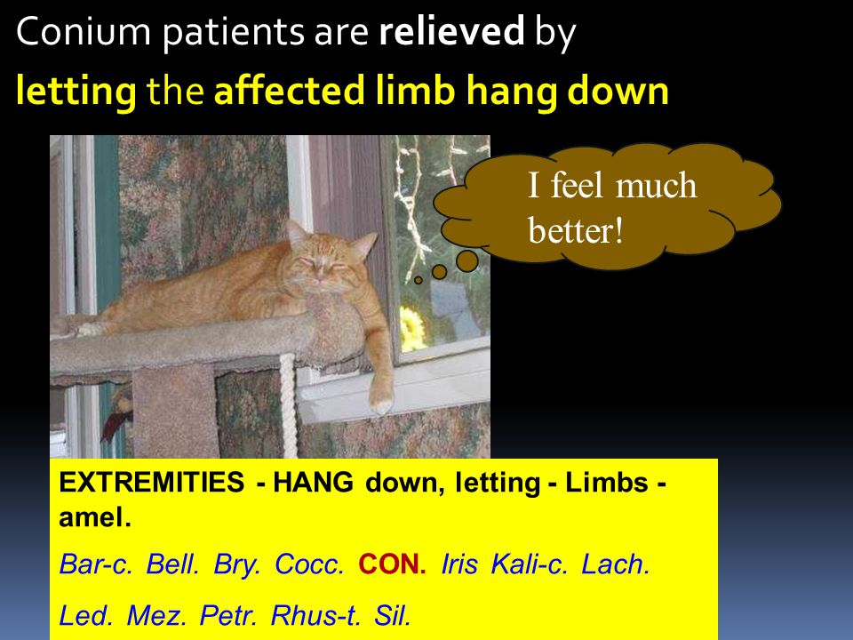 Conium patients are relieved by letting the affected limb hang down