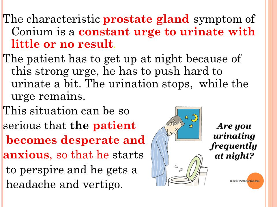 The characteristic prostate gland symptom of Conium is a constant urge to urinate with little or no result.