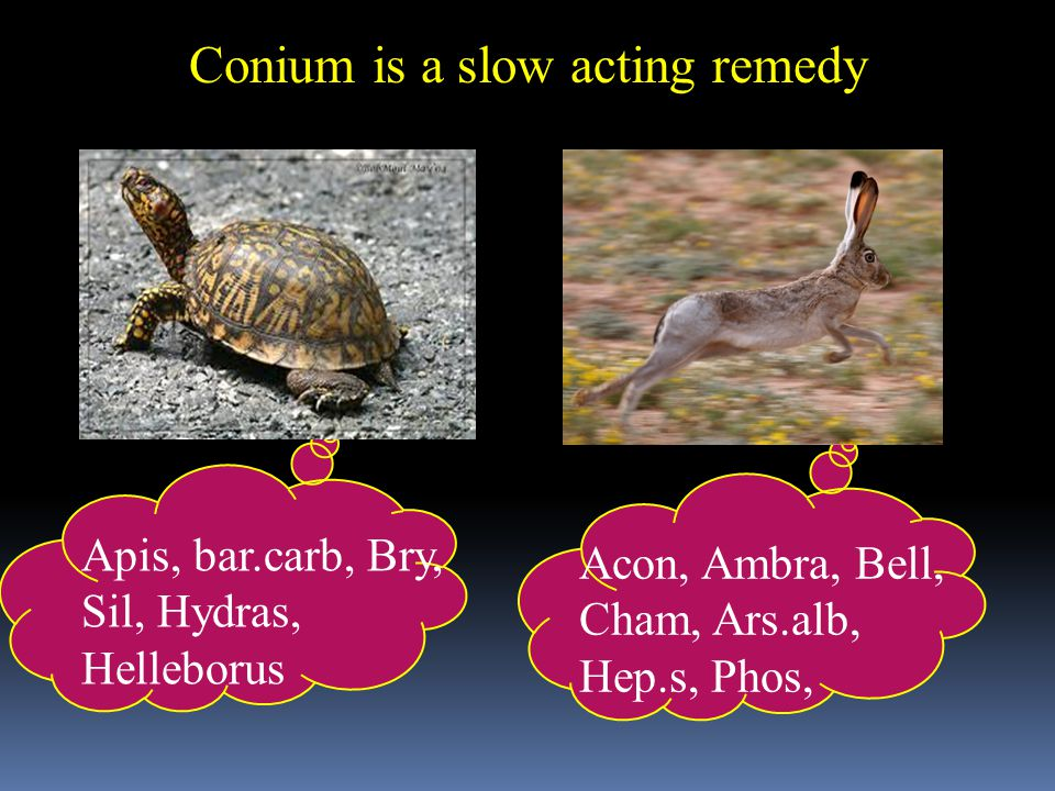 Conium is a slow acting remedy