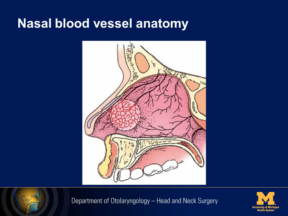 Nasal blood vessel anatomy