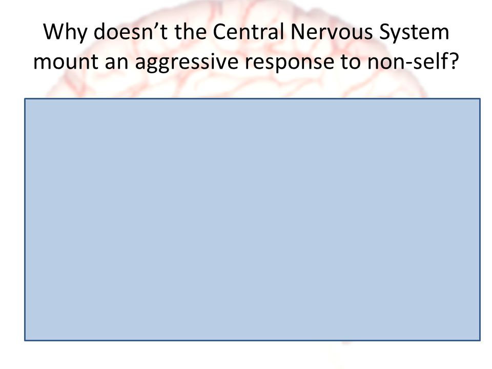 Why doesn't the Central Nervous System mount an aggressive response to non-self