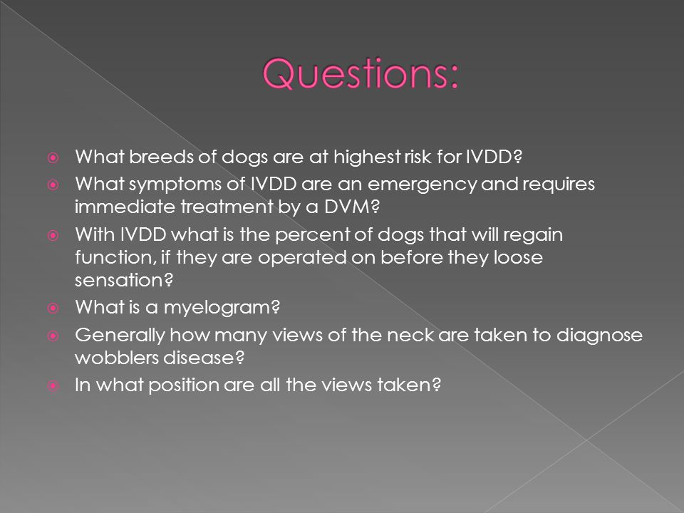 Questions: What breeds of dogs are at highest risk for IVDD