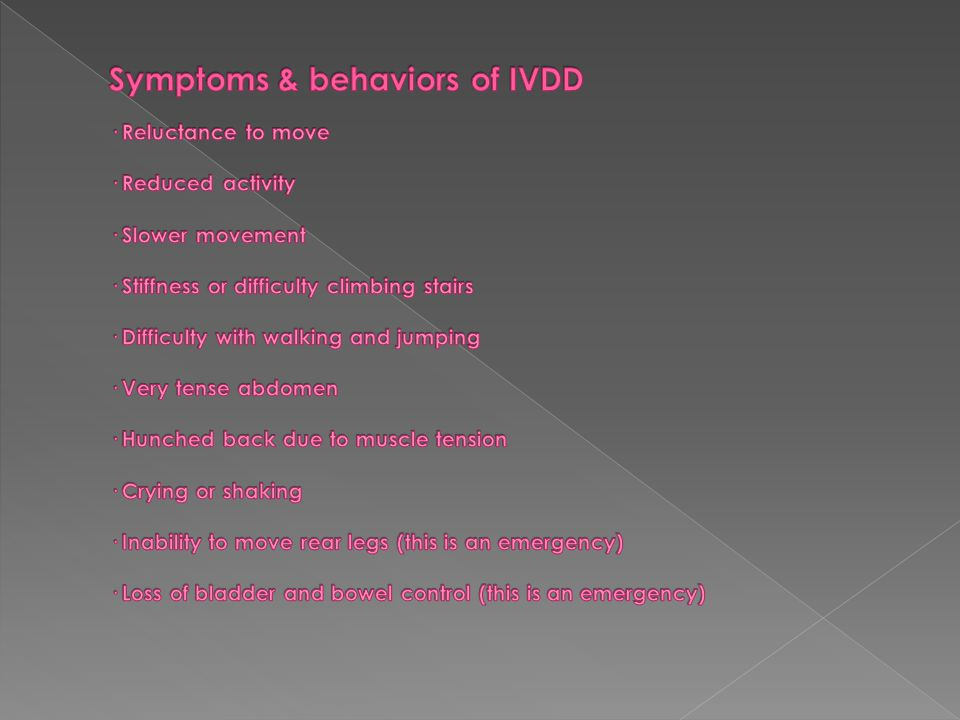 Symptoms & behaviors of IVDD · Reluctance to move · Reduced activity · Slower movement · Stiffness or difficulty climbing stairs · Difficulty with walking and jumping · Very tense abdomen · Hunched back due to muscle tension · Crying or shaking · Inability to move rear legs (this is an emergency) · Loss of bladder and bowel control (this is an emergency)
