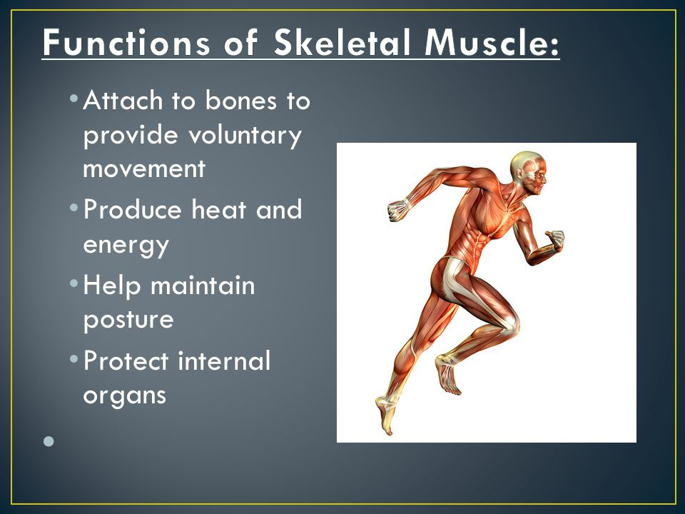 Functions of Skeletal Muscle: