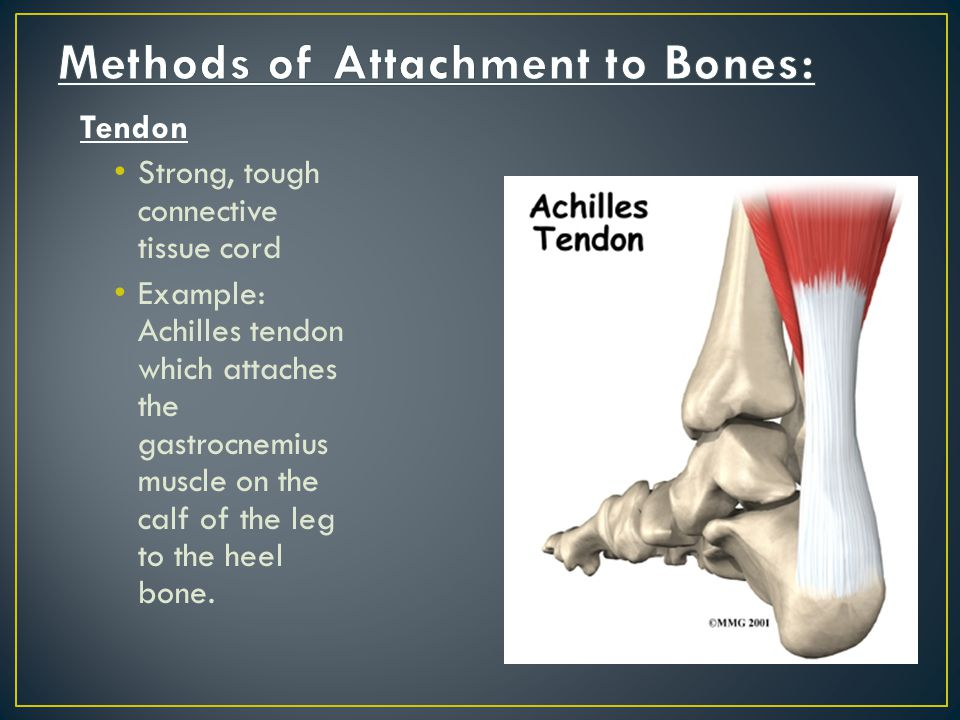 Methods of Attachment to Bones: