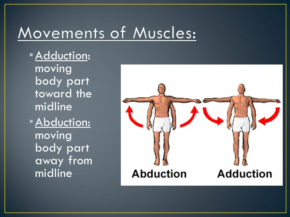 Movements of Muscles: Adduction: moving body part toward the midline