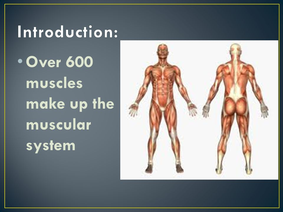 Introduction: Over 600 muscles make up the muscular system