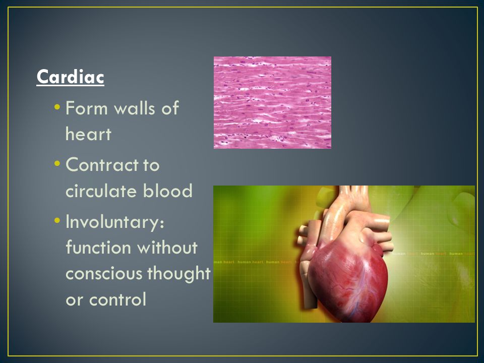 Cardiac Form walls of heart. Contract to circulate blood.