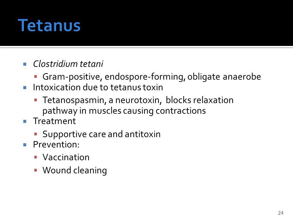 Tetanus Clostridium tetani