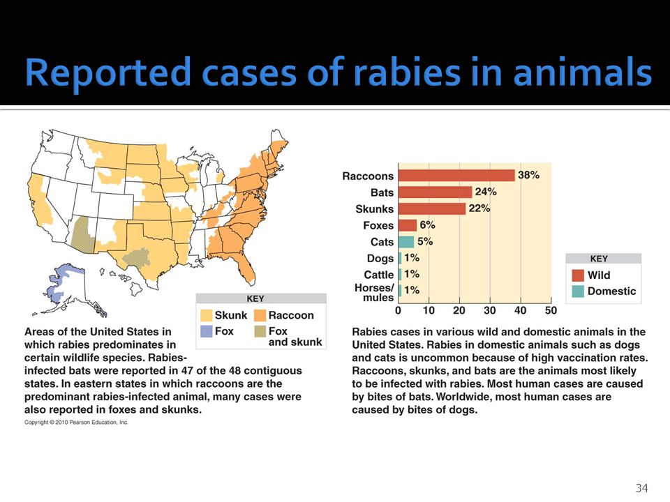 Reported cases of rabies in animals