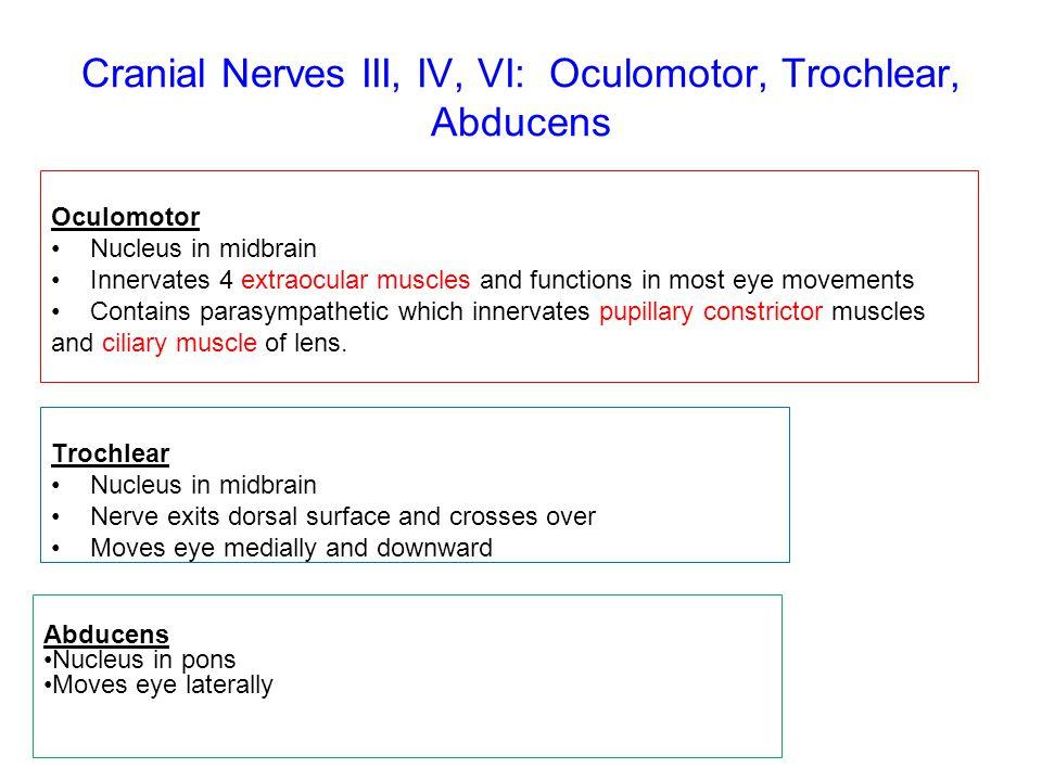 Cranial Nerves III, IV, VI: Oculomotor, Trochlear, Abducens