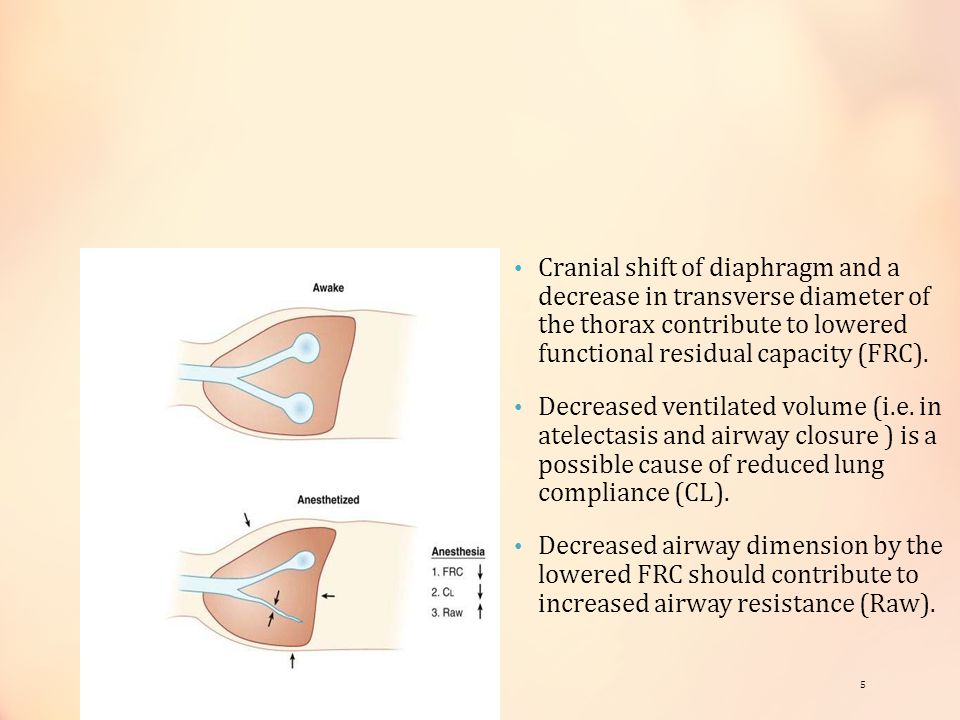 Cranial shift of diaphragm and a decrease in transverse diameter of the thorax contribute to lowered functional residual capacity (FRC).