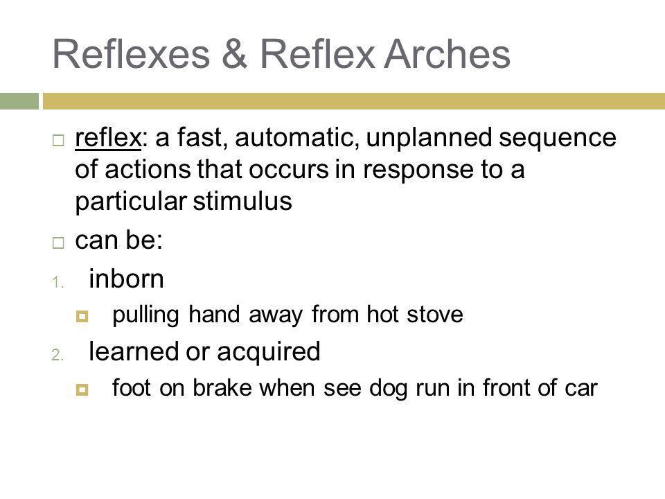 Reflexes & Reflex Arches