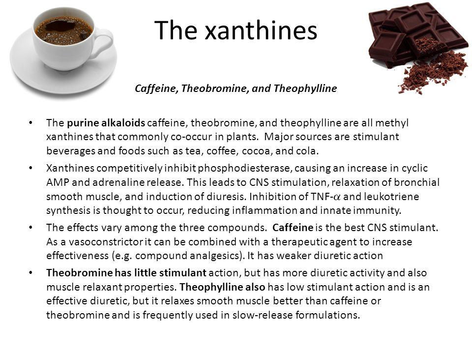 Caffeine, Theobromine, and Theophylline