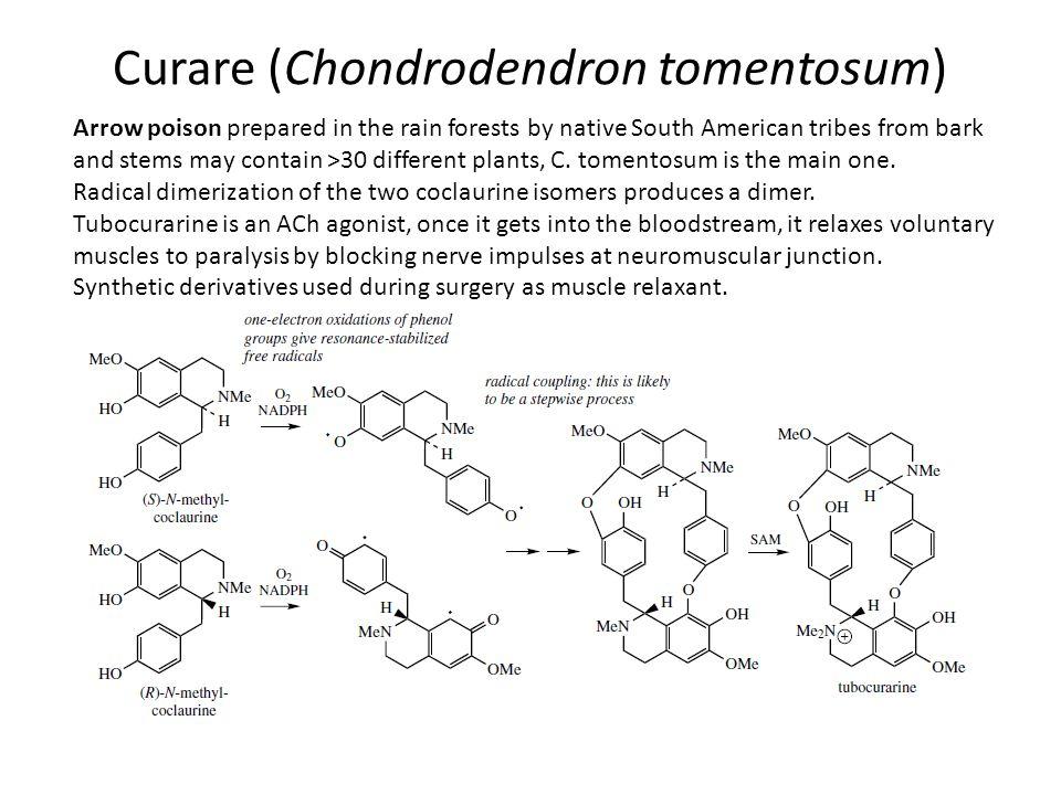 Curare (Chondrodendron tomentosum)
