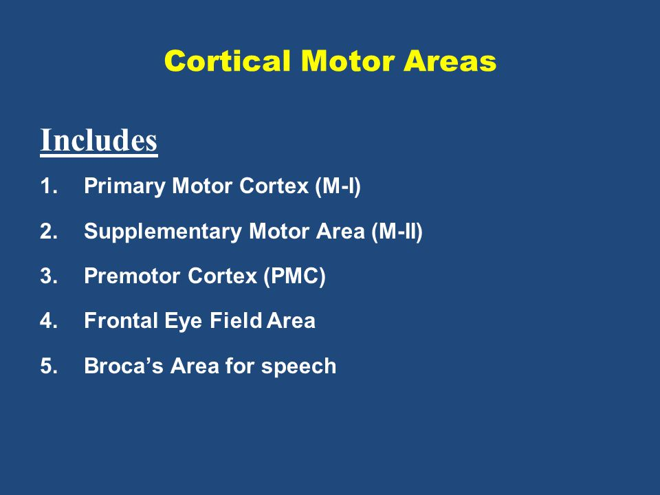 Includes Cortical Motor Areas Primary Motor Cortex (M-I)