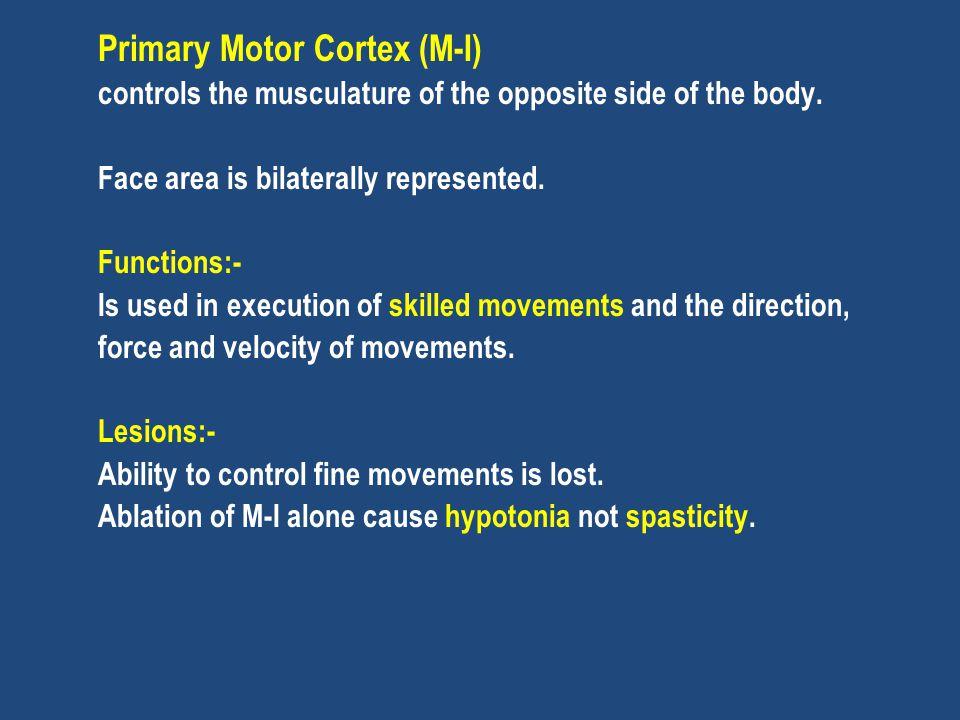 Primary Motor Cortex (M-I)