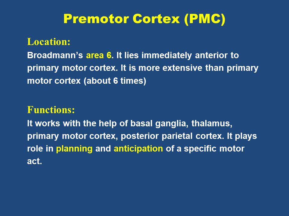Premotor Cortex (PMC) Location: Functions: