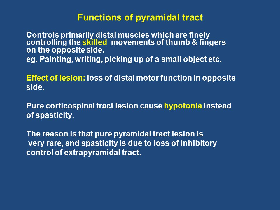 Functions of pyramidal tract