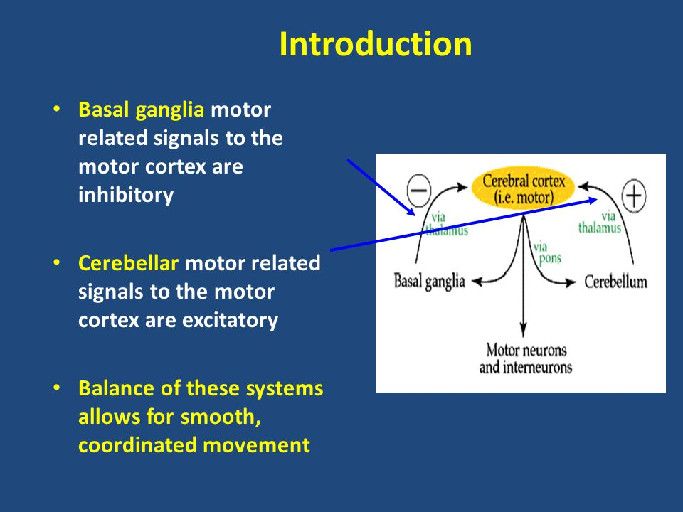 Introduction Basal ganglia motor related signals to the motor cortex are inhibitory.